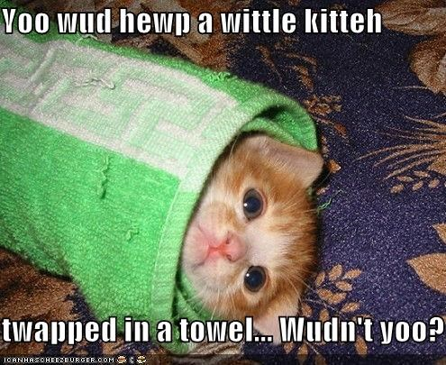 Yoo wud hewp a wittle kitteh  twapped in a towel... Wudn't yoo?