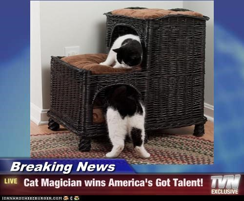Breaking News -  Cat Magician wins America's Got Talent!