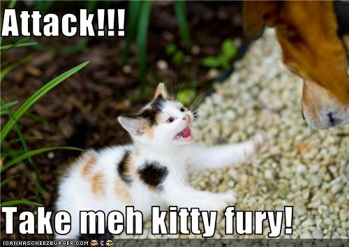 Attack!!!  Take meh kitty fury!