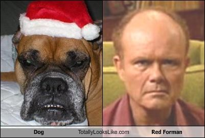 Dog Totally Looks Like Red Forman