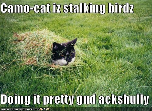 Camo-cat iz stalking birdz  Doing it pretty gud ackshully