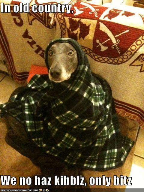 bits,blanket,greyhound,in old country,kibbles,noms,none,shawl
