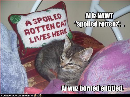 am not,caption,denial,entitlement,spoiled cat