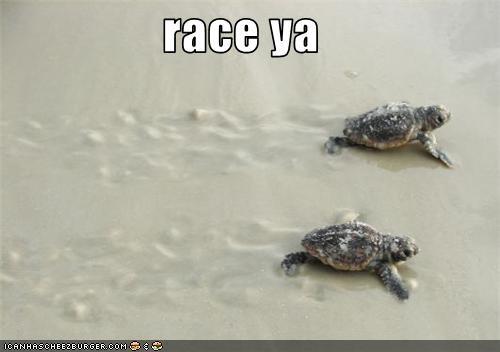 beach,cute,lolturtles,racing