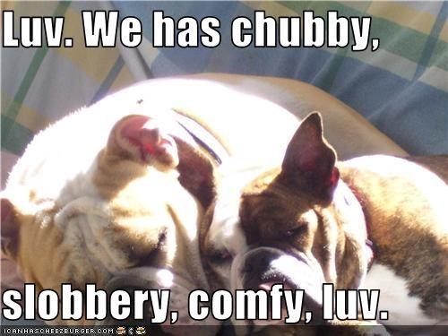 bulldog mix,love,sleep,slobber