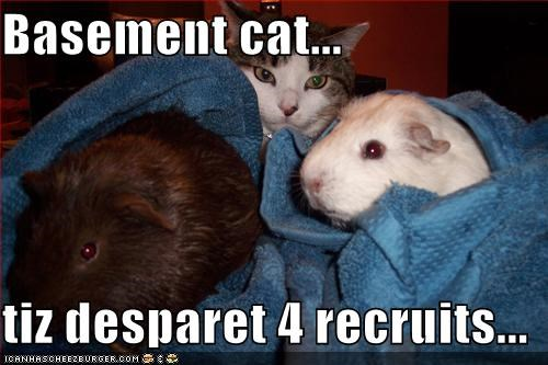 Basement cat...  tiz desparet 4 recruits...