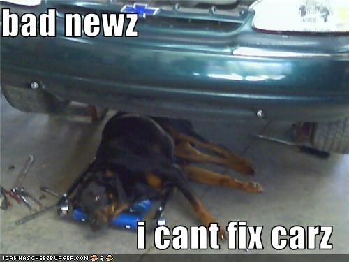 bad news,car,fix,garage,mechanic,rottweiler,tools