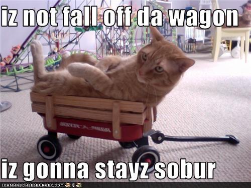iz not fall off da wagon  iz gonna stayz sobur