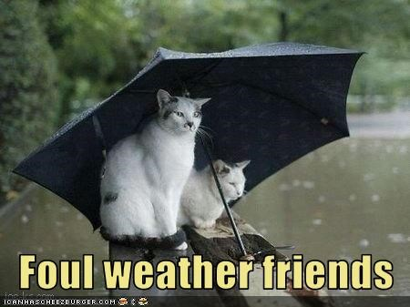 Foul weather friends