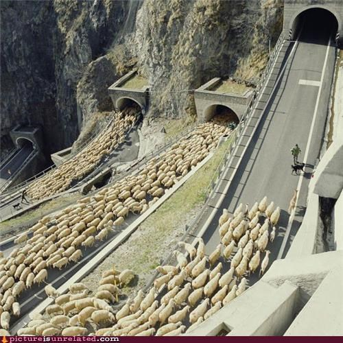 animals,hordes,OverKill 9000,sheep,Videogames,wtf