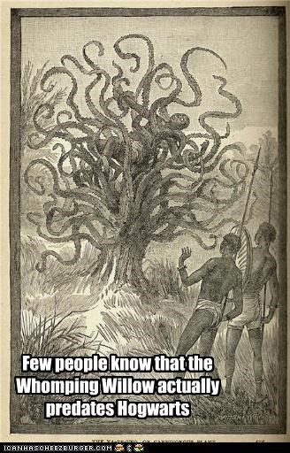 Few people know that the Whomping Willow actually predates Hogwarts