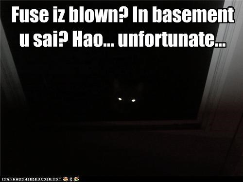 basement,basement cat,blown,blown fuse,caption,captioned,cat,dark,darkness,fuse,lying,planning,playing dumb,trap