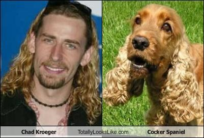 Chad Kroeger Totally Looks Like Cocker Spaniel