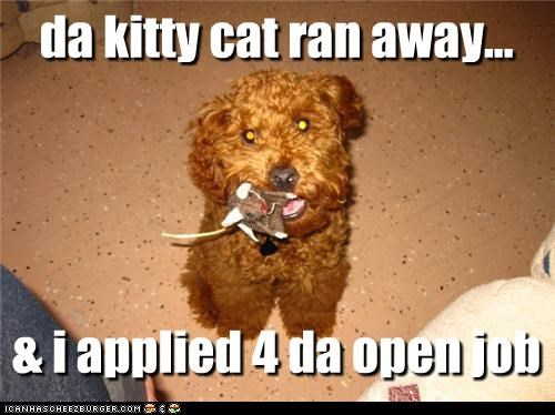 kitty cat ran away