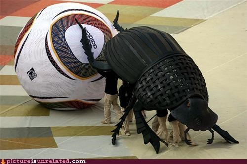 Good Old Giant Beetle Ball