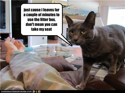 angry,litterbox
