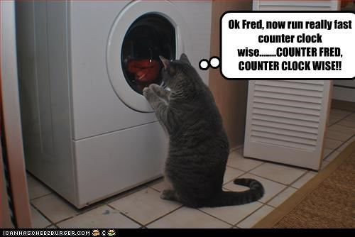 Ok Fred, now run really fast counter clock wise........COUNTER FRED, COUNTER CLOCK WISE!!