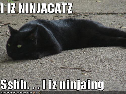 I IZ NINJACATZ  Sshh. . . I iz ninjaing