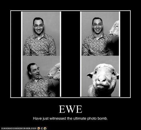 animals,arrested development,Buster Bluth,ewe,photobomb,TV