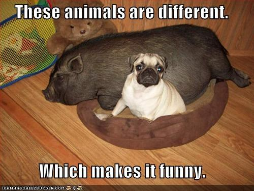 These animals are different.  Which makes it funny.