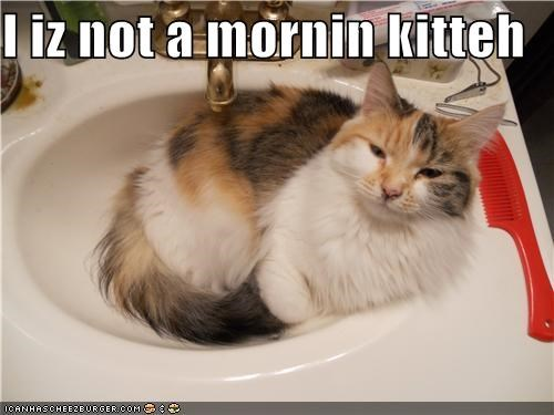 I iz not a mornin kitteh