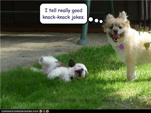 I tell really good knock knock jokes.   Cheezburger