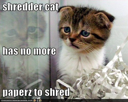 shredder cat  has no more  paperz to shred