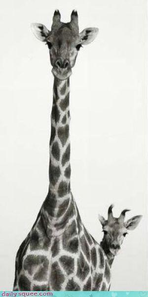 Nice Hiding Job, Giraffe