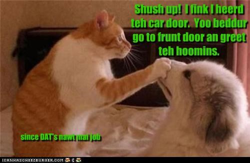 Shush up!  I fink I heerd teh car door.  Yoo beddur go to frunt door an greet teh hoomins.