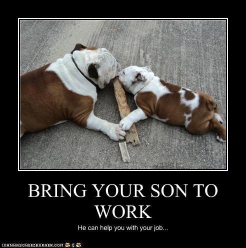 bulldog,chewing,dad,helping,puppy,son,wood,work