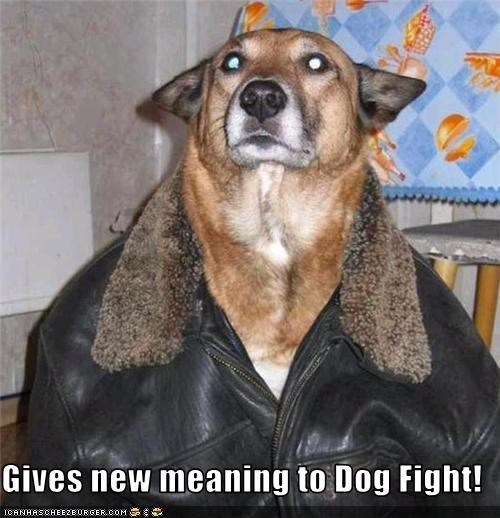Gives new meaning to Dog Fight!