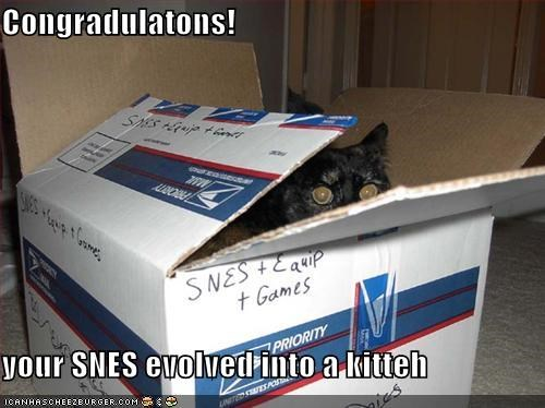 Congradulatons!  your SNES evolved into a kitteh