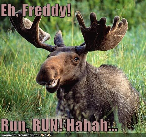 Eh, Freddy!  Run, RUN! Hahah...