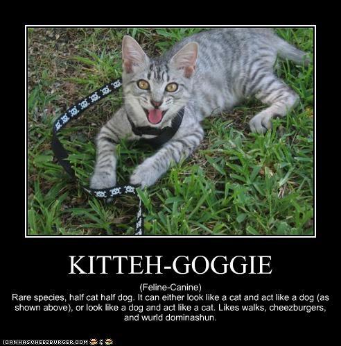 KITTEH-GOGGIE