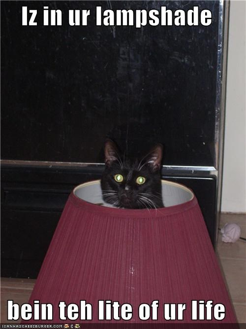 Iz in ur lampshade  bein teh lite of ur life