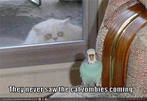 They never saw the cat zombies coming
