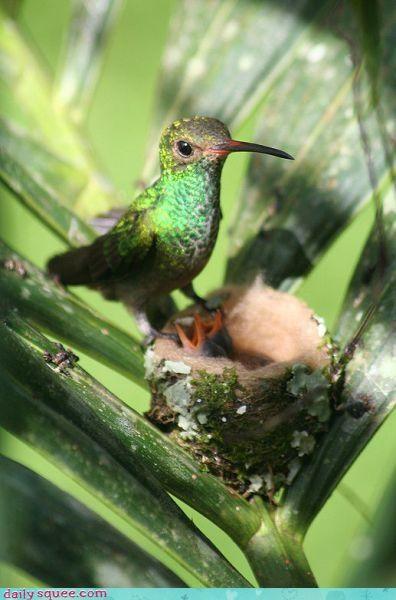 cute,hummingbird,pretty