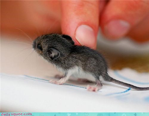 The Tiniest Mousey