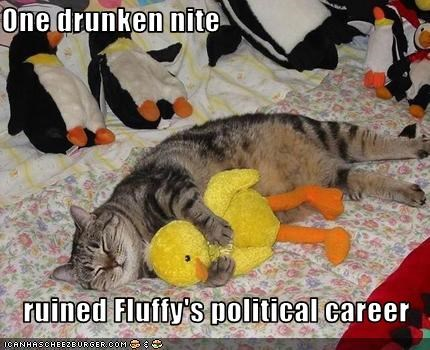 One drunken nite  ruined Fluffy's political career