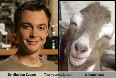 Dr. Sheldon Cooper Totally Looks Like a happy goat