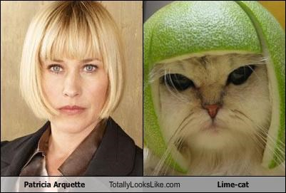 Patricia Arquette Totally Looks Like Lime-cat
