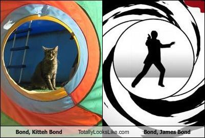 Bond, Kitteh Bond Totally Looks Like Bond, James Bond