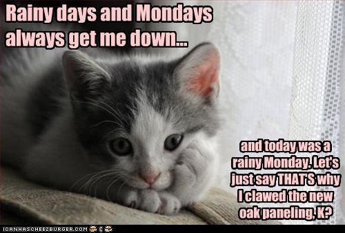 caption,captioned,cat,clawed,days,down,explanation,kitten,mondays,new,oak,panelling,rainy,reason,Sad