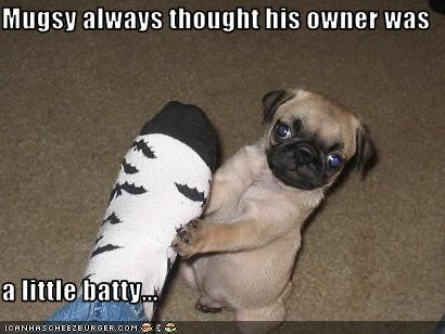 Mugsy always thought his owner was  a little batty...