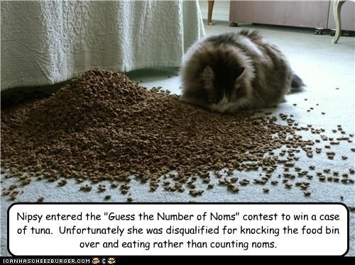 "Nipsy entered the ""Guess the Number of Noms"" contest to win a case of tuna.  Unfortunately she was disqualified for knocking the food bin over and eating rather than counting noms."