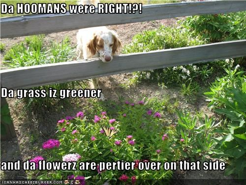Da HOOMANS were RIGHT!?! Da grass iz greener and da flowerz are pertier over on that side