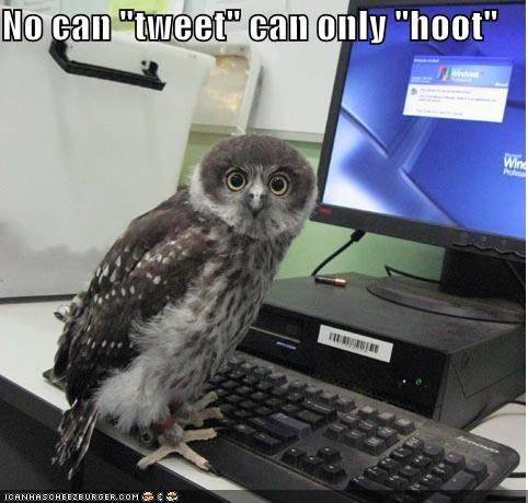 "No can ""tweet"" can only ""hoot"""
