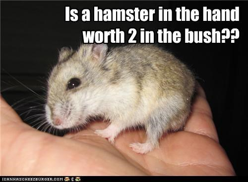 Is a hamster in the hand worth 2 in the bush??