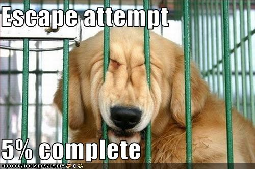 Escape attempt    5% complete