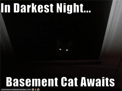In Darkest Night...  Basement Cat Awaits